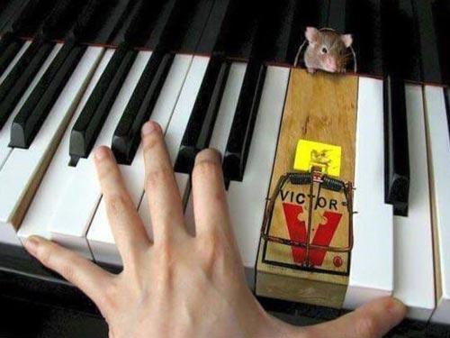 Castellón Pianos - Clausura de Entrada de Ratones